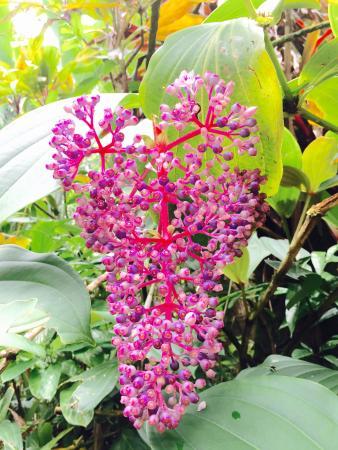 Papaikou, Havaí: photo4.jpg