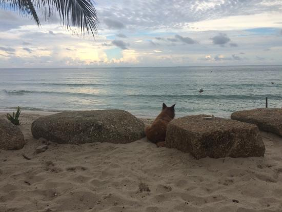 Samui Beach Apartments : photo0.jpg
