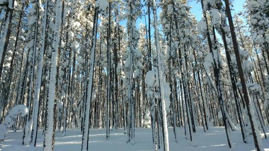 Chief Joseph Cross Country Ski Trail: Nordic skiing