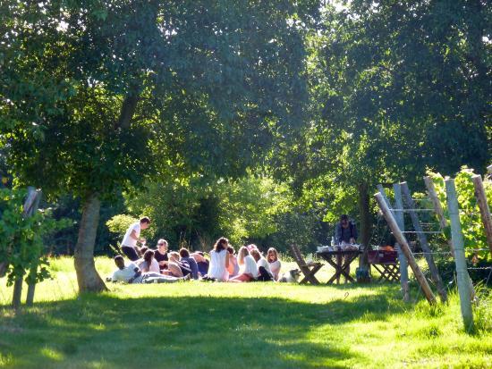 Oatley Vineyard: Picnicking in the vines