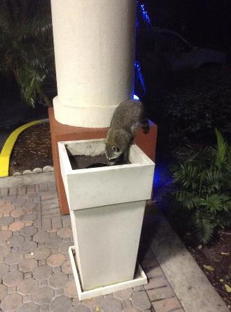 Holiday Inn Express Hotel & Suites Orlando - International Drive: Мой новый друг