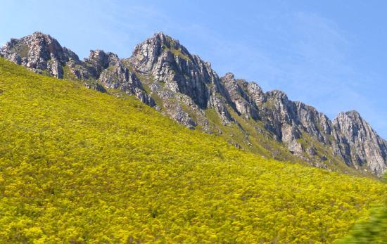 โอเวอร์เบิร์ก, แอฟริกาใต้: Beautiful spring flowers