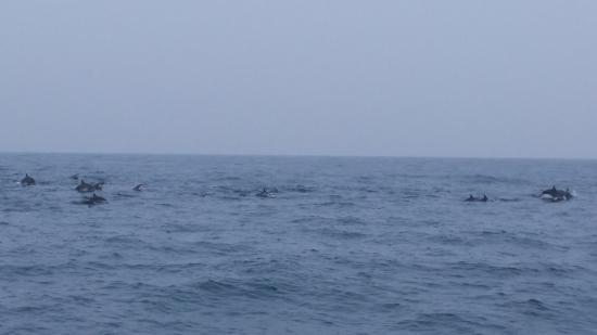 Sumal Villa: Наблюдение за китами и дельфинами в Мериссе