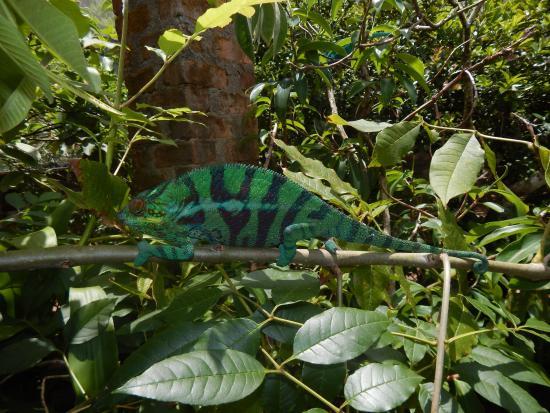 Reserve Peyrieras Madagascar Exotic