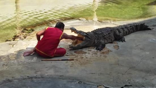 Samutprakan Crocodile Farm and Zoo Photo