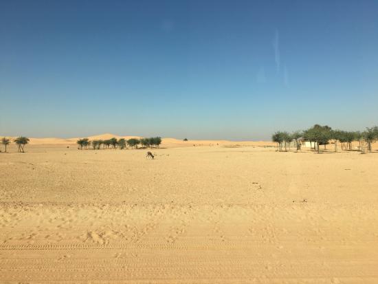 show user reviews dubai desert conservation reserve emirate