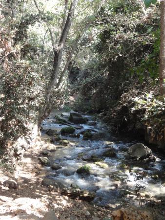 Merom Golan-billede