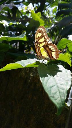 Spirogyra Butterfly Garden: 20160114_131517_large.jpg