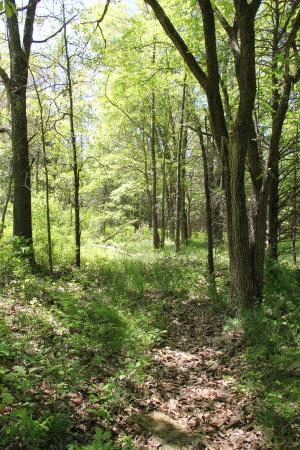Garfield, AR: Telegraph Road and Trail of Tears