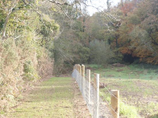 Inch, Irlanda: woodland walks
