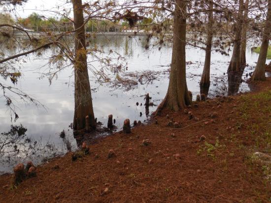 Wyndham Cypress Palms: Lake view