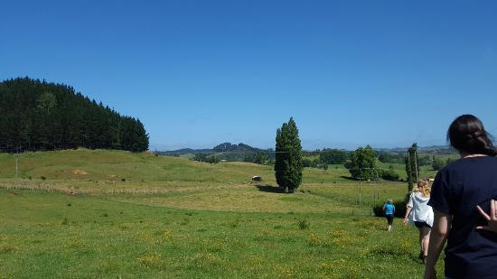 Waitomo Big Bird Bed & Breakfast: 20160109_103335_large.jpg