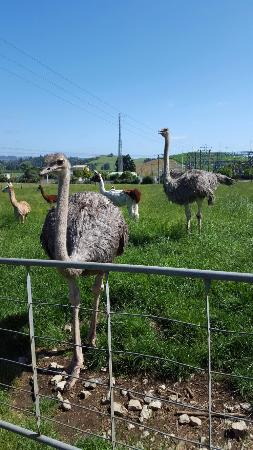 Waitomo Big Bird Bed & Breakfast: 20160109_103530_large.jpg