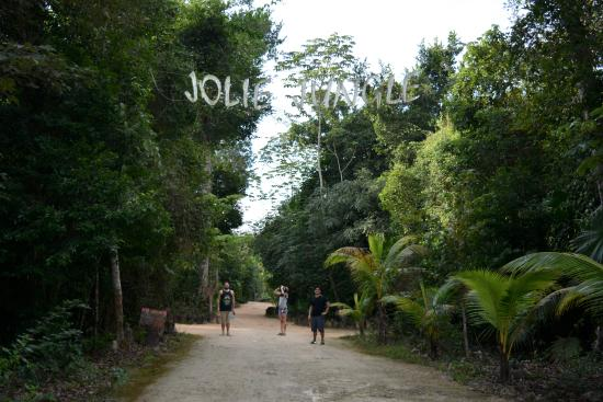 Jolie Jungle Photo