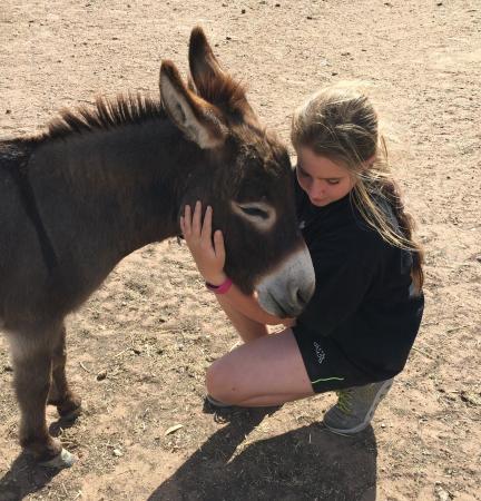 Donkey Tales Farm Cottages