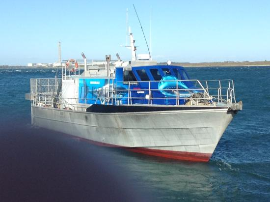 Bluff, Nuova Zelanda: Only reliable Great white cage diving boat in NZ