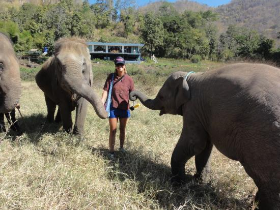 Elephant Nature Park: Mum and Son xxx