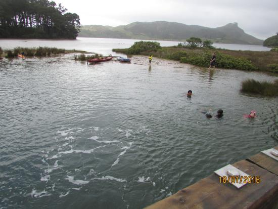 Opoutere Coastal Camping : The bridge jumping site at the Opoutere estuary