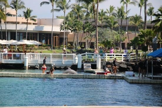 Waikoloa, Hawaï : 힐튼외이콜로아 빌리지내 돌핀하우스