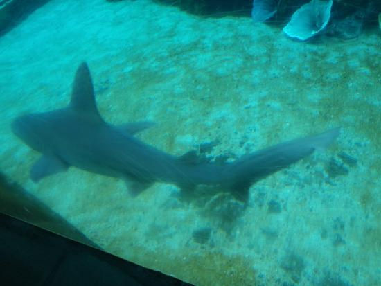 Foto Sea Life Park Hawaii