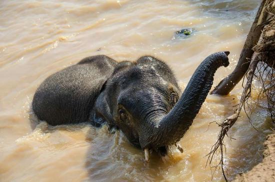 Sayaboury, Лаос: FB_IMG_1453290857299_large.jpg