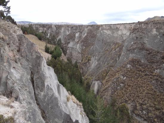 Pujili, Ekwador: Arvores no Canon del Rio Toachi