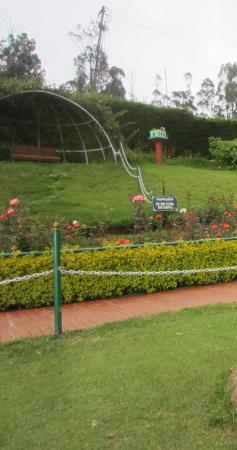 Rose Garden Foto