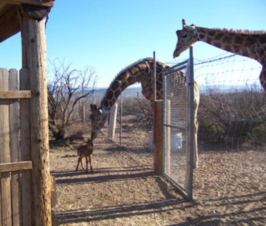 Cottonwood, AZ: Out of Africa Wild Animal Park