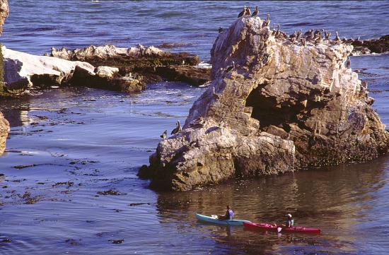 Shore Cliff Hotel: Kayak in the Pacific Ocean
