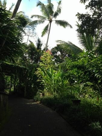 Foto de Uma by COMO, Ubud