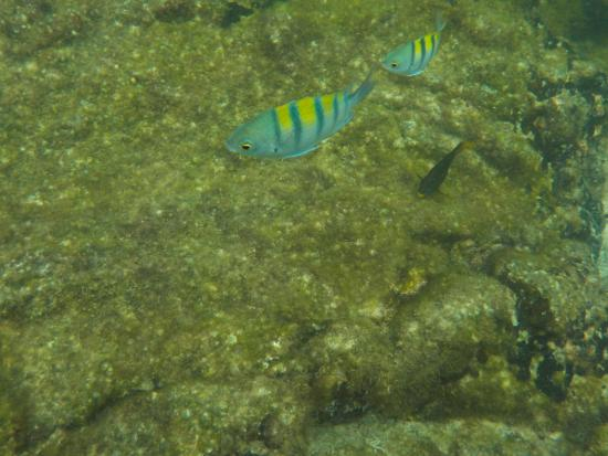 Foto de Puerto Villamil