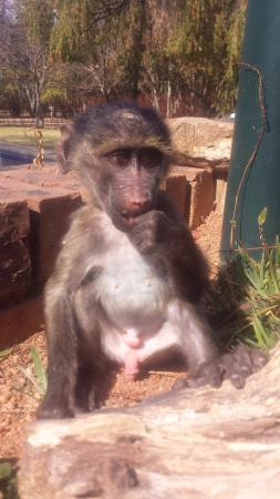 Badplaas, Sydafrika: Feeding time