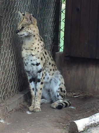 Badplaas, Sudáfrica: Here kitty kitty