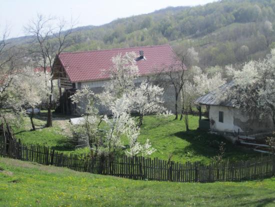 Valcea County Photo