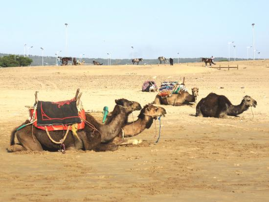 Essaouira Beach: Пляж города Эс-Сувейра