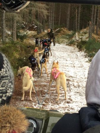 Cairngorm Sleddog Centre: Very insightful, thank you so much for letting us into your home so to speak. All dogs were frie