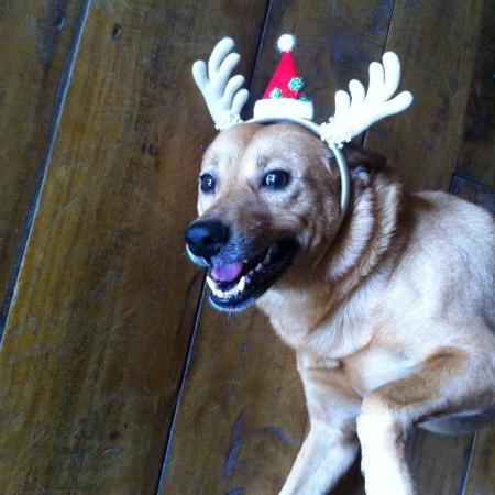 Ballena, Costa Rica: Jenga the restaurant dog