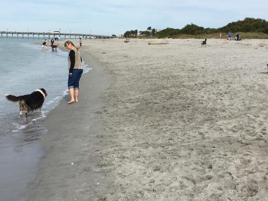 Dog Friendly Beach Venice Ca