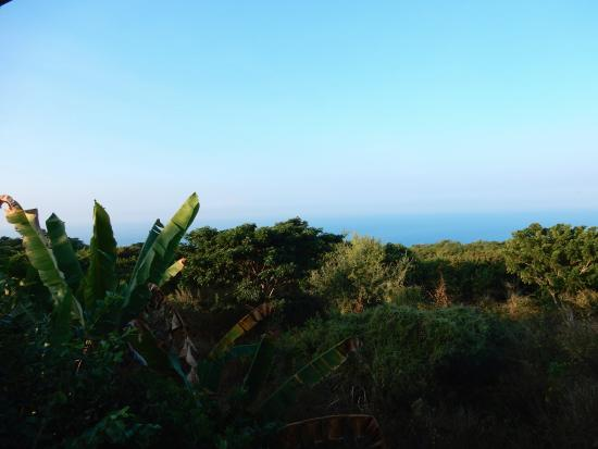 Hale Ho'ola B&B: View of Bordering Grounds and Ocean from Room