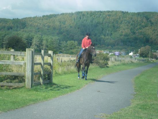 Pembrey, UK: horse