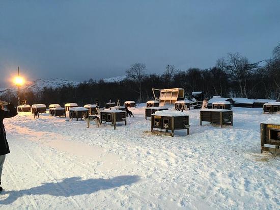 Snowhotel Kirkenes: Huskey beds!