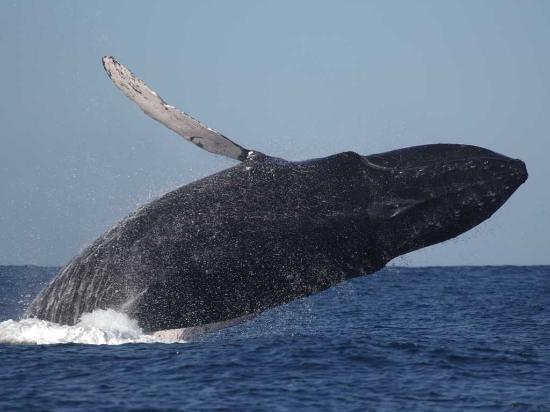 Whale Adventures Puerto Vallarta