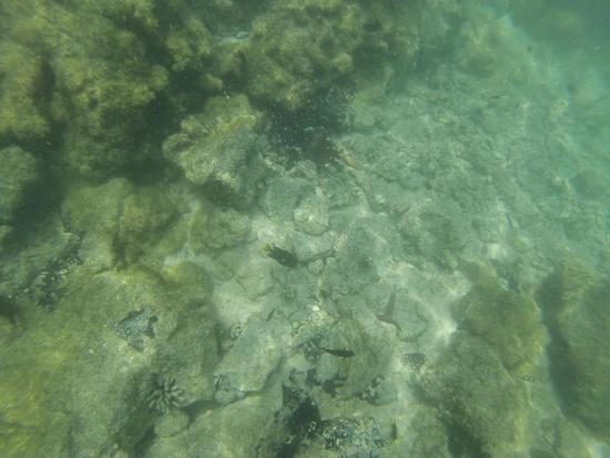 Foto Puerto Villamil