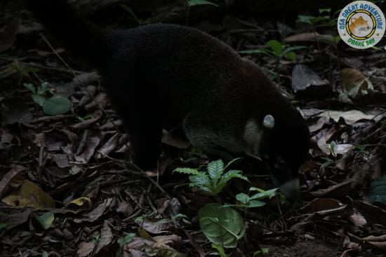 Κόλπος Drake, Κόστα Ρίκα: CORCOVADO NATIONAL PARK