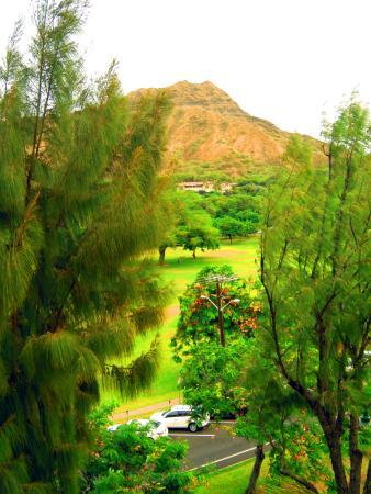 Lotus Honolulu at Diamond Head لوحة