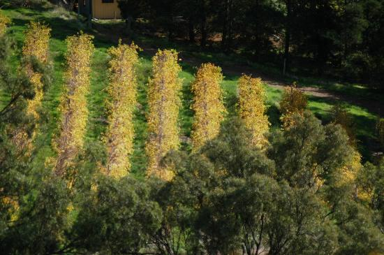 The Blue Grape Vineyard Accommodation: The Vineyard in autumn
