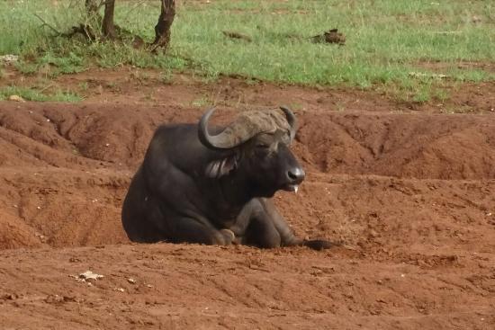 Région d'Arusha, Tanzanie : DSC07733_large.jpg