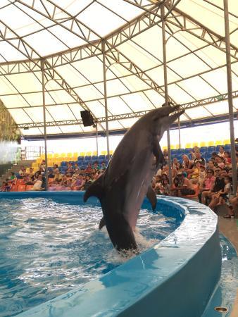 Dolphins Bay Nemo Phuket