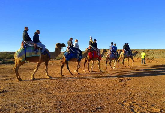 The Beltana Camel Experience