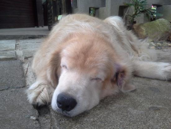 Lazy Dog Bed & Breakfast Φωτογραφία